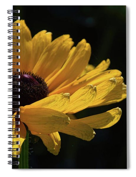 Ox Eye Susan Spiral Notebook