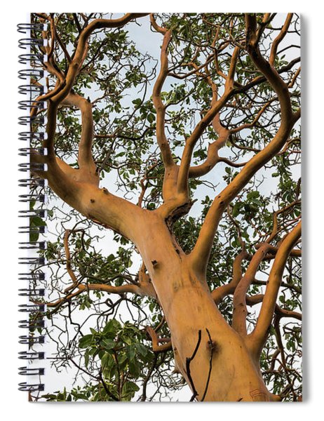 Pacific Madrone Trees Spiral Notebook