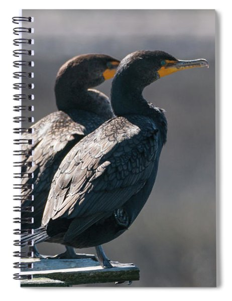 Pair Double-crested Cormorant 3 March 2018 Spiral Notebook