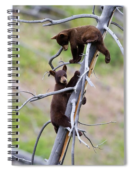 Pair Of Bear Cubs In A Tree Spiral Notebook