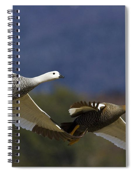 Pair Of Upland Geese Spiral Notebook