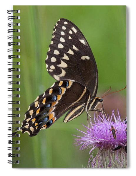 Palamedes Swallowtail And Friends Spiral Notebook
