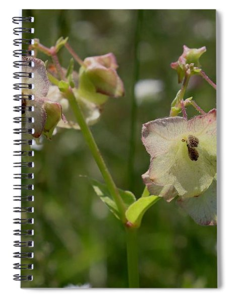 Pale Umbrella Wort Spiral Notebook