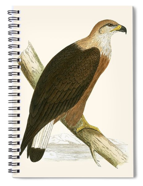 Pallas's Sea Eagle Spiral Notebook