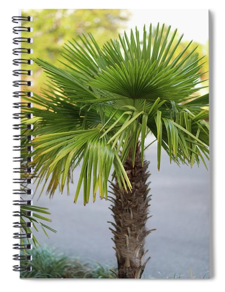 Palm Tree Just There Spiral Notebook