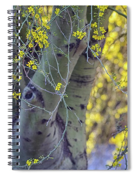 Palo Verde Tree 5994-041818 Spiral Notebook