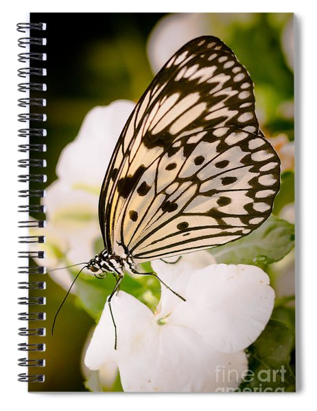 Paper Kite On White Spiral Notebook