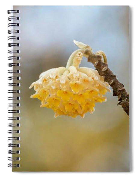 Paperbush Flower Spiral Notebook