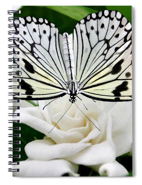 Paperkite On Gardenia Spiral Notebook