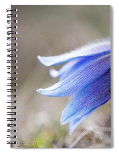 Pasque Flower's Silver Grey Hair Spiral Notebook