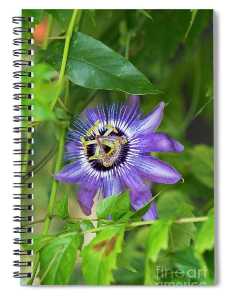 Passion Flower Betty Myles Young Spiral Notebook