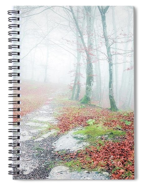 Path In The Forest Spiral Notebook