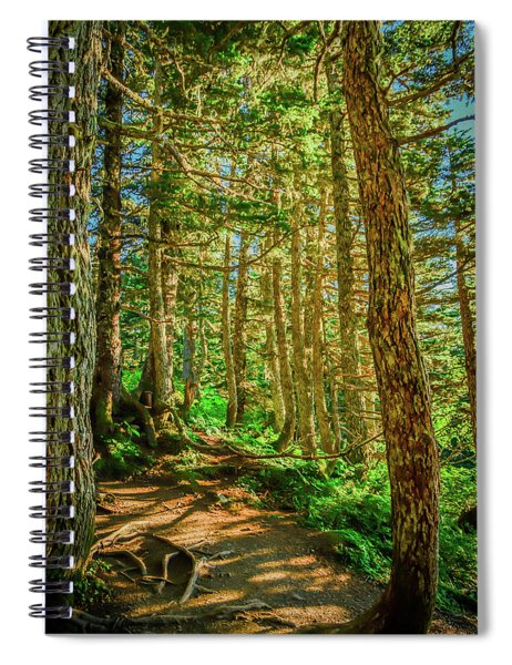 Path In The Trees Spiral Notebook