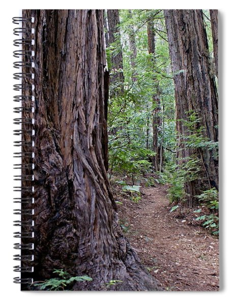 Pathway Through A Redwood Forest On Mt Tamalpais Spiral Notebook
