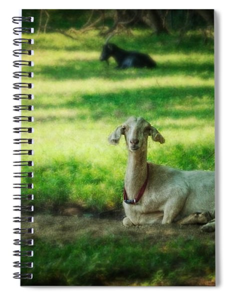 Peaceful Pasture Spiral Notebook