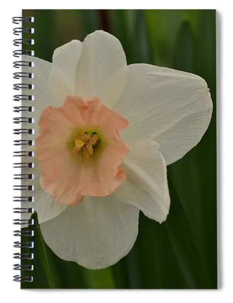 Peaches And Cream Spiral Notebook