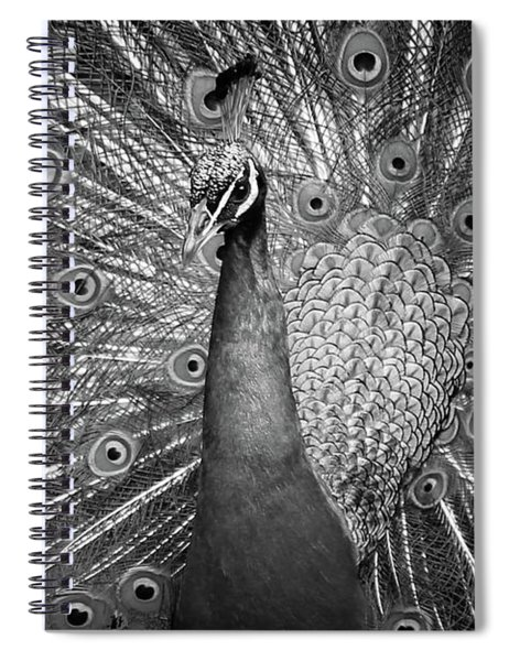 Peacock In Black And White Spiral Notebook