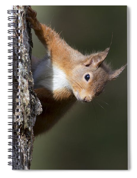 Peekaboo - Red Squirrel #29 Spiral Notebook