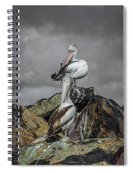 Pelicans On Rocks Spiral Notebook