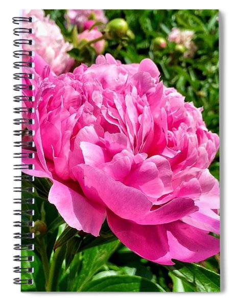Peonies In Spring Spiral Notebook