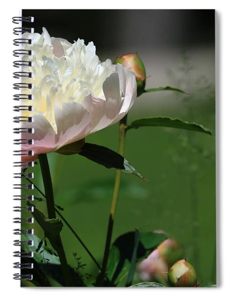 Peony Beauty Spiral Notebook