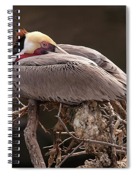 Perched Pelican Spiral Notebook