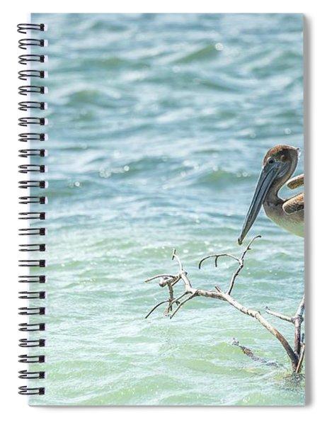 Perching Pelican #2 Spiral Notebook