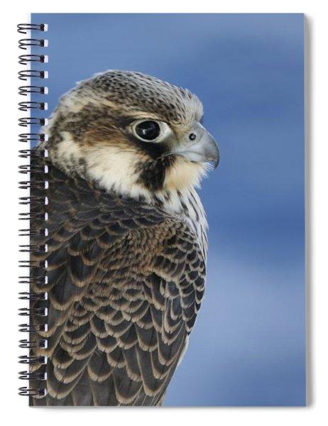 Peregrine Falcon Juvenile Close Up Spiral Notebook