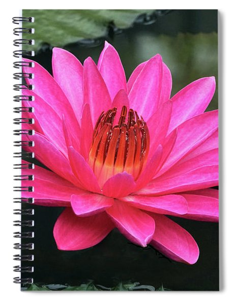 Perfect Pink Petals Of A Waterlily Spiral Notebook