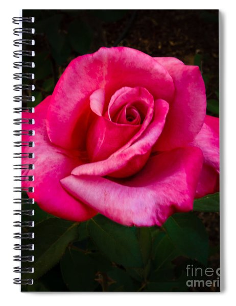 Perfect Rose Spiral Notebook