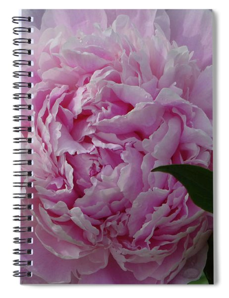 Perfection In Pink Spiral Notebook