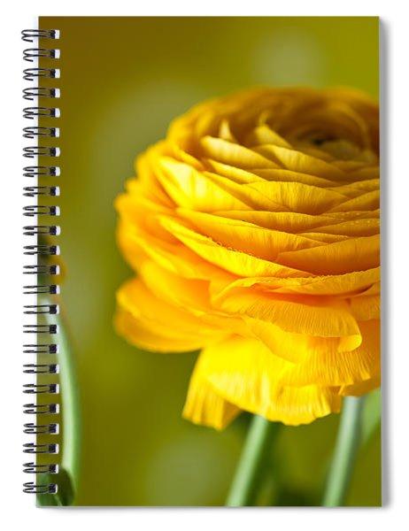 Persian Buttercup Flower Spiral Notebook