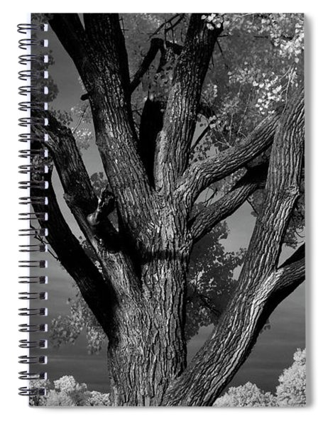 Personality Spiral Notebook