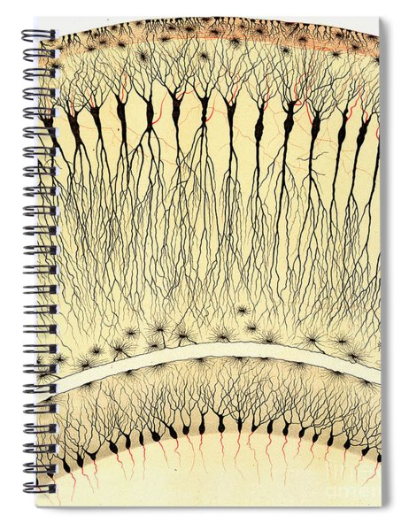 Pes Hipocampi Major Santiago Ramon Y Cajal Spiral Notebook