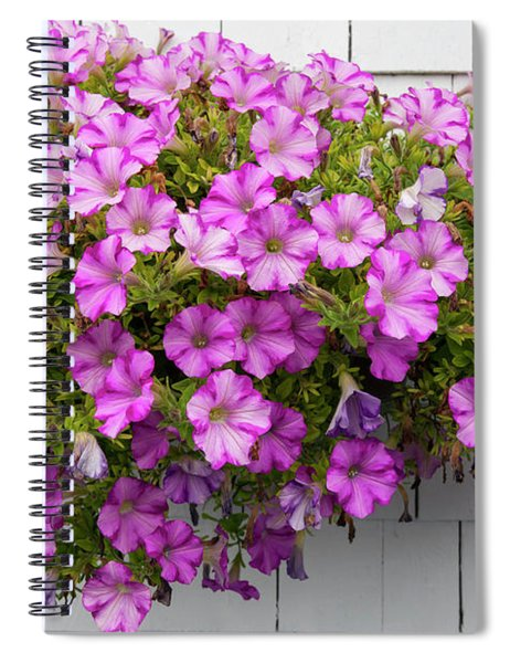 Petunias On White Wall Spiral Notebook