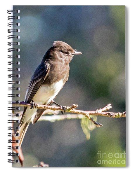 Pheobe Spiral Notebook