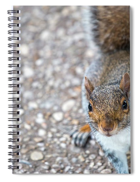 Photo Of Squirel Looking Up From The Ground Spiral Notebook