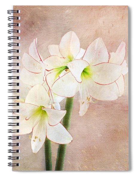 Picotee Amaryllis Spiral Notebook