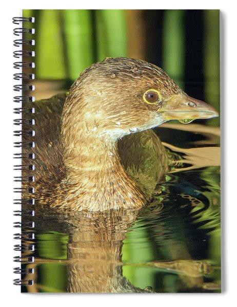 Pied-billed Grebe 111017-0029-1cr Spiral Notebook