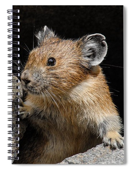 Pika Looking Out From Its Burrow Spiral Notebook