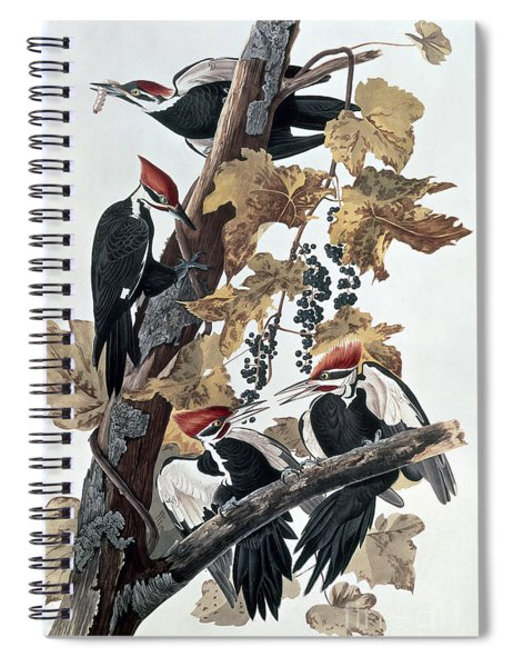 Pileated Woodpeckers Spiral Notebook