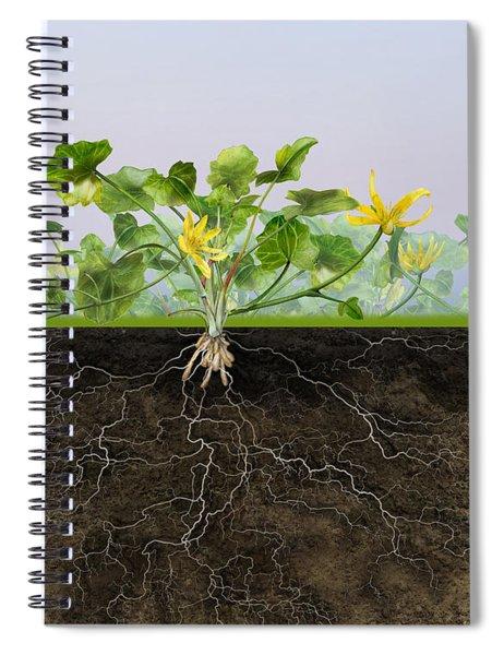 Pilewort Or Lesser Celandine Ranunculus Ficaria - Root System -  Spiral Notebook