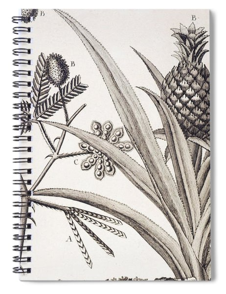 Pineapple Plant Spiral Notebook