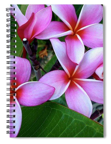 Pink And Purple Plumeria Spiral Notebook
