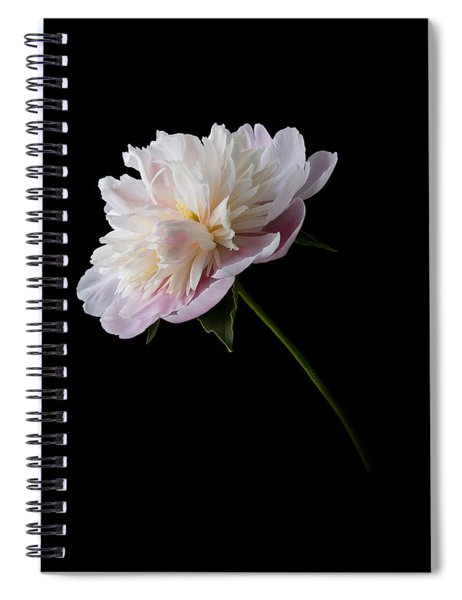 Pink And White Peony Spiral Notebook