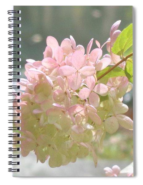 Pink Bloom In Sun Spiral Notebook