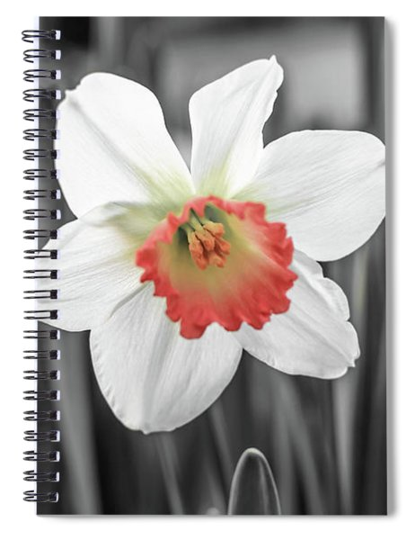 Pink Cup Pop Spiral Notebook