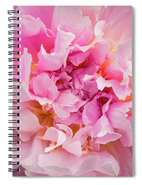 Pink Double Peony Spiral Notebook