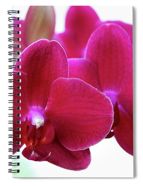 Red Orchid Spiral Notebook