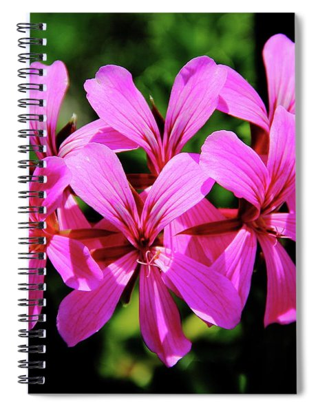 Pink Ivy Geranium Spiral Notebook